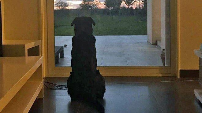 le chien d'emiliano sala-min